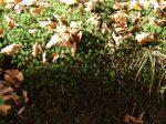 frunze moarte...